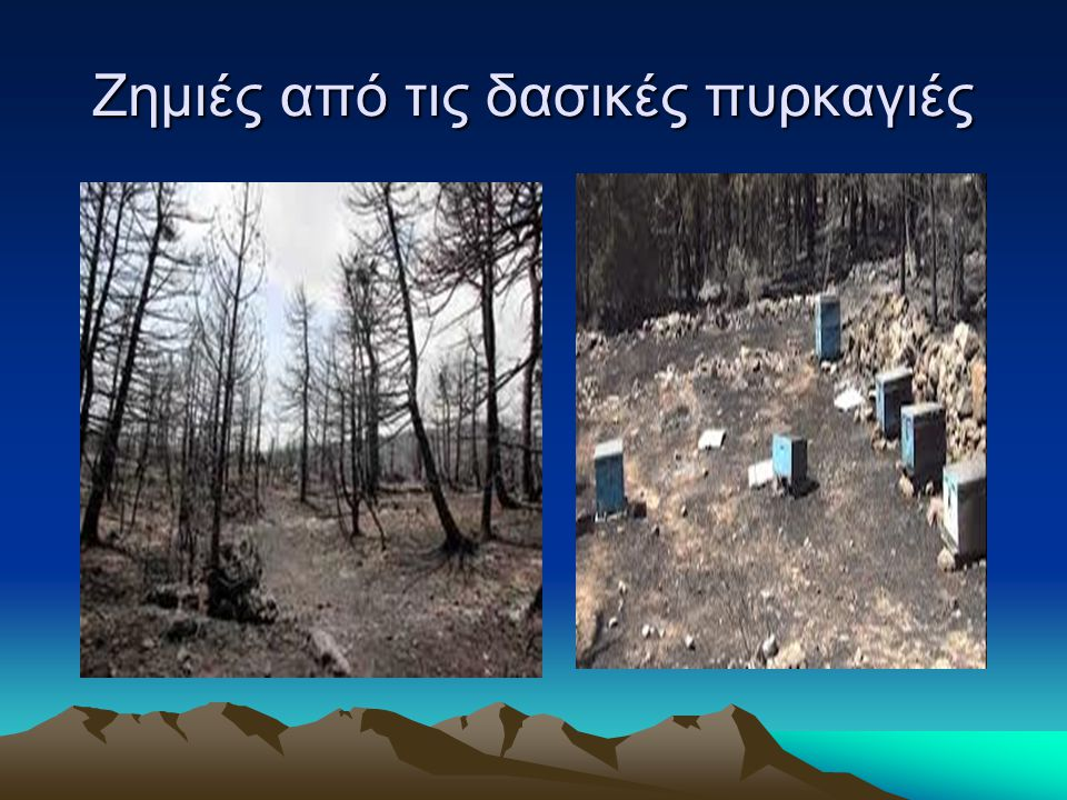 Ζημιές από τις δασικές πυρκαγιές