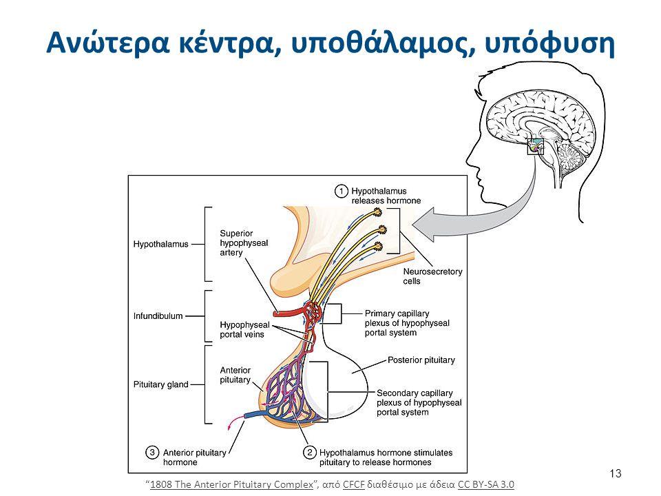 Υποθάλαμος, υπόφυση, θυρεοειδής και περιφερικοί στόχοι