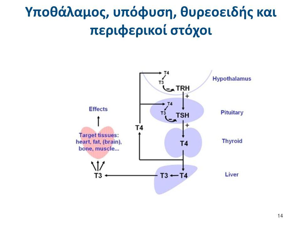 Θυρεοσφαιρίνη (TG)