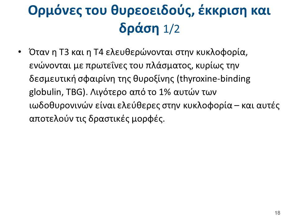 Ορμόνες του θυρεοειδούς, έκκριση και δράση 2/2