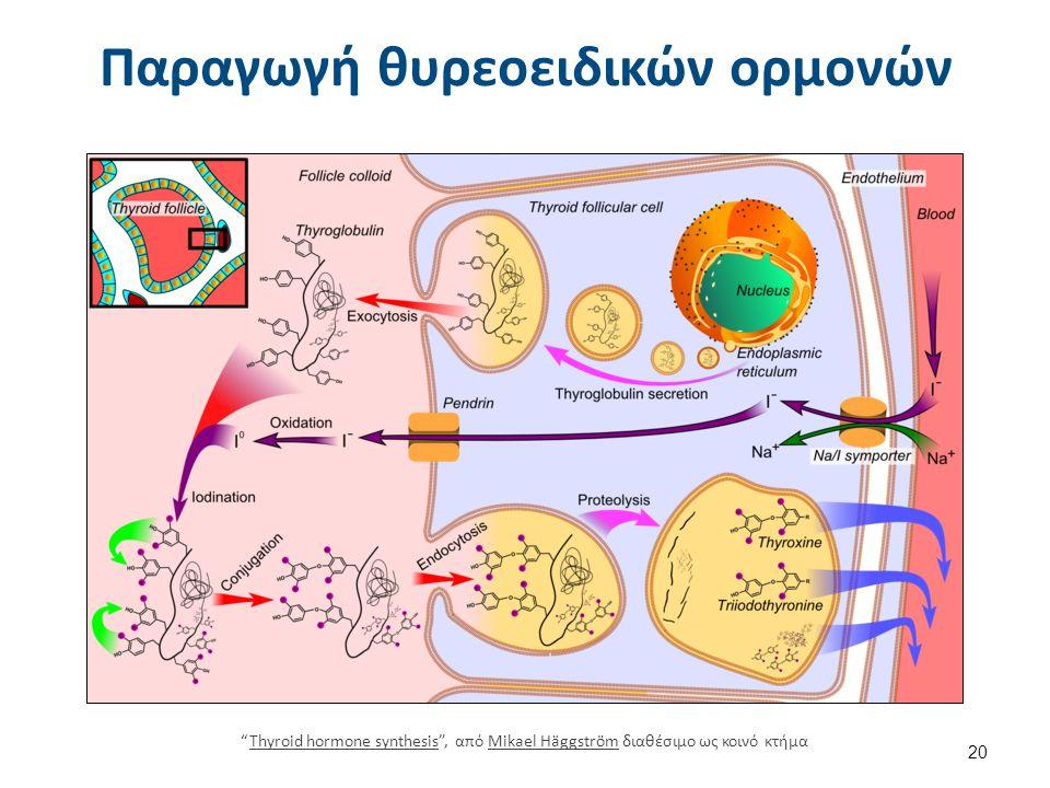 Δράση της TSH Ανάπτυξη κολλοειδών σταγονιδίων.