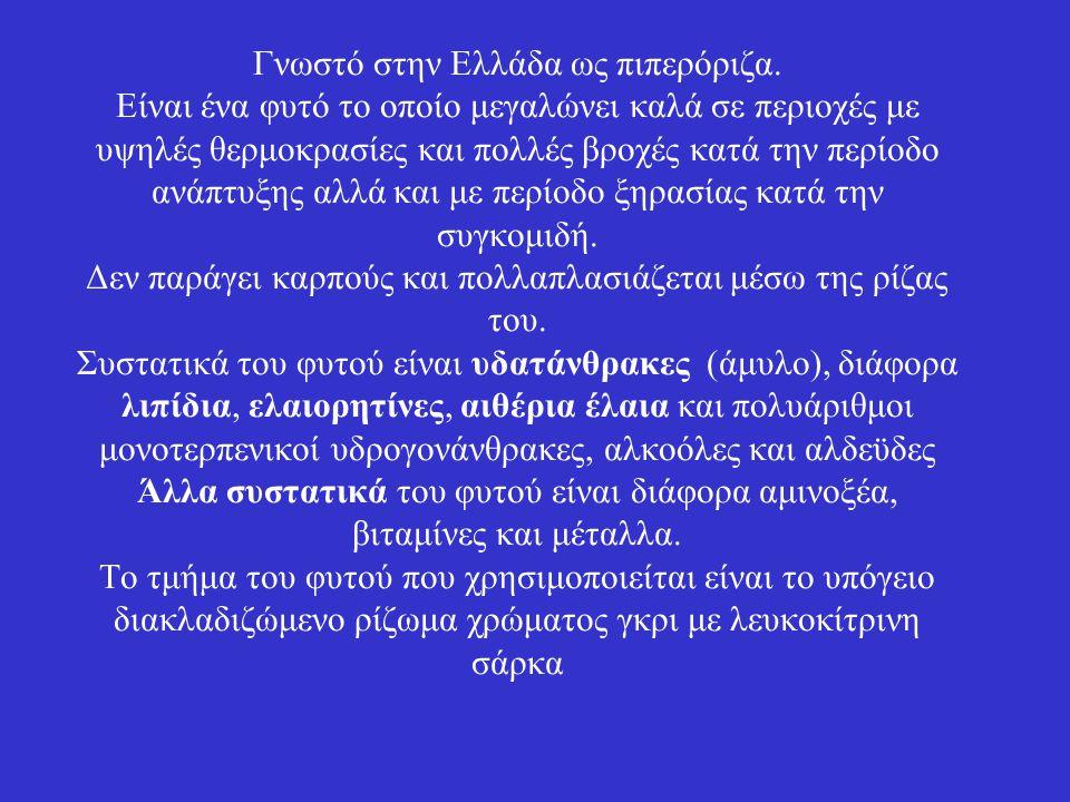 Γνωστό στην Ελλάδα ως πιπερόριζα