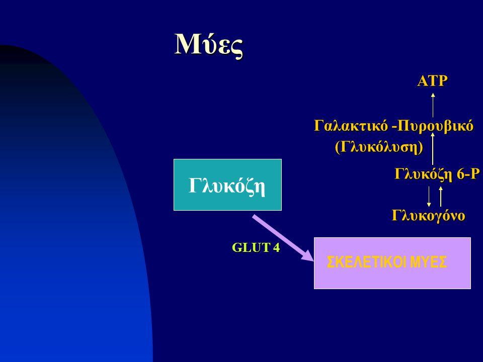 Μύες Γλυκόζη ATP Γαλακτικό -Πυρουβικό (Γλυκόλυση) Γλυκόζη 6-P