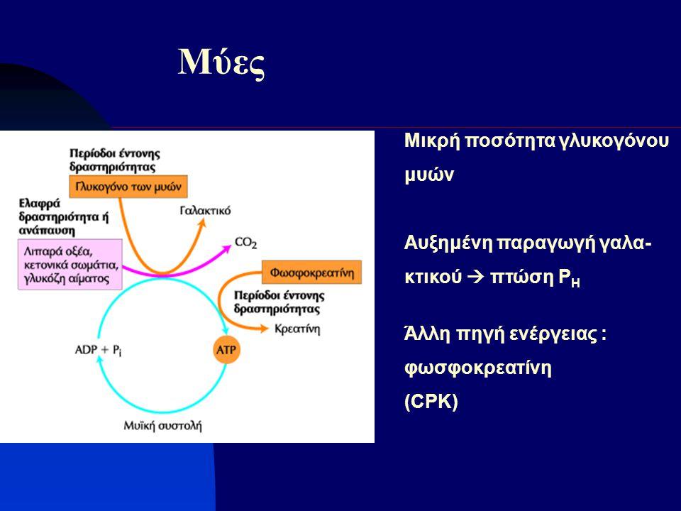 Μύες Μικρή ποσότητα γλυκογόνου μυών Αυξημένη παραγωγή γαλα-