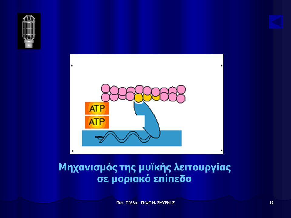 Μηχανισμός της μυϊκής λειτουργίας σε μοριακό επίπεδο