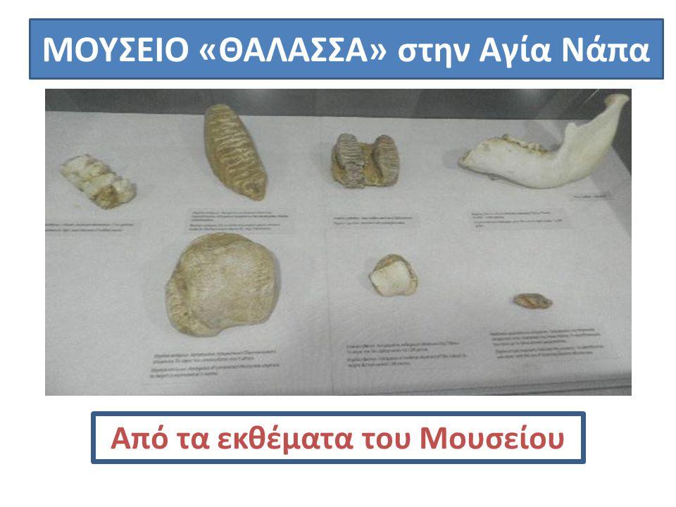 ΜΟΥΣΕΙΟ «ΘΑΛΑΣΣΑ» στην Αγία Νάπα Από τα εκθέματα του Μουσείου