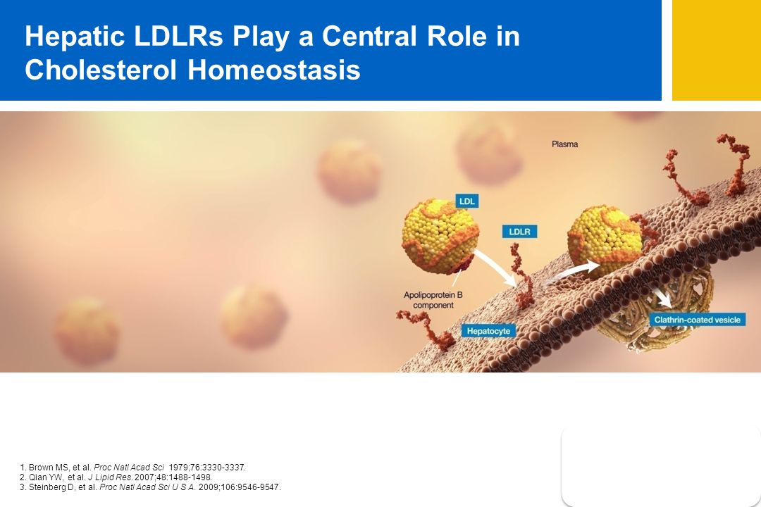 Hepatic LDLRs Play a Central Role in Cholesterol Homeostasis