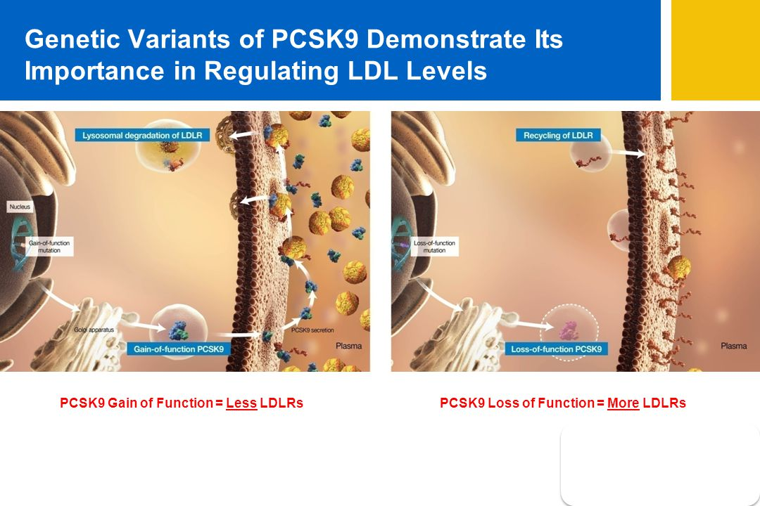 Genetic Variants of PCSK9 Demonstrate Its Importance in Regulating LDL Levels