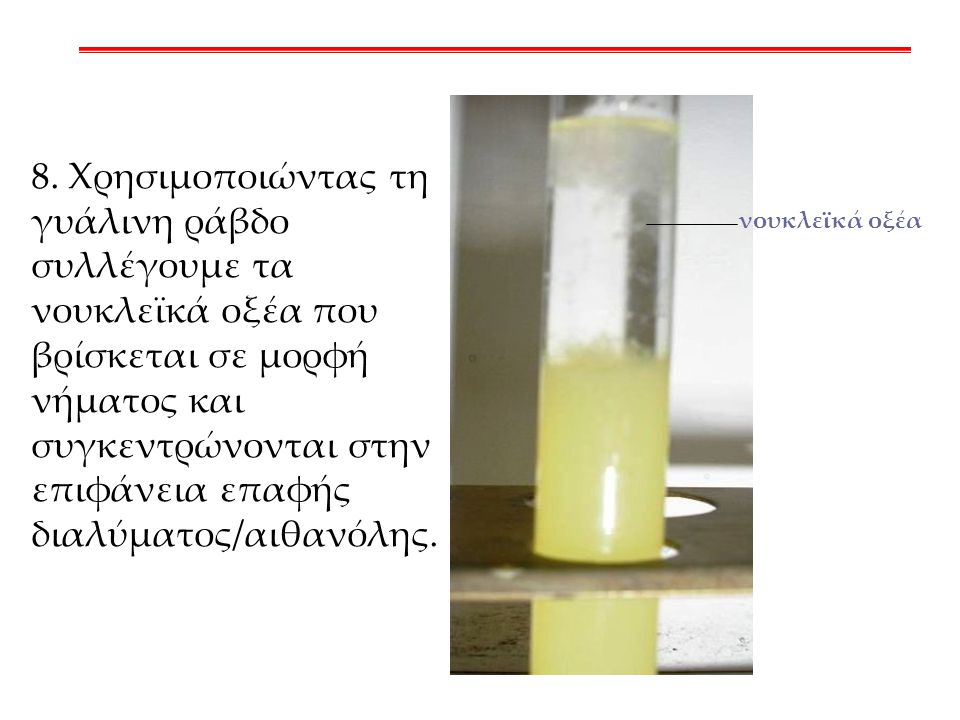 8. Χρησιμοποιώντας τη γυάλινη ράβδο συλλέγουμε τα νουκλεϊκά οξέα που βρίσκεται σε μορφή νήματος και συγκεντρώνονται στην επιφάνεια επαφής διαλύματος/αιθανόλης.