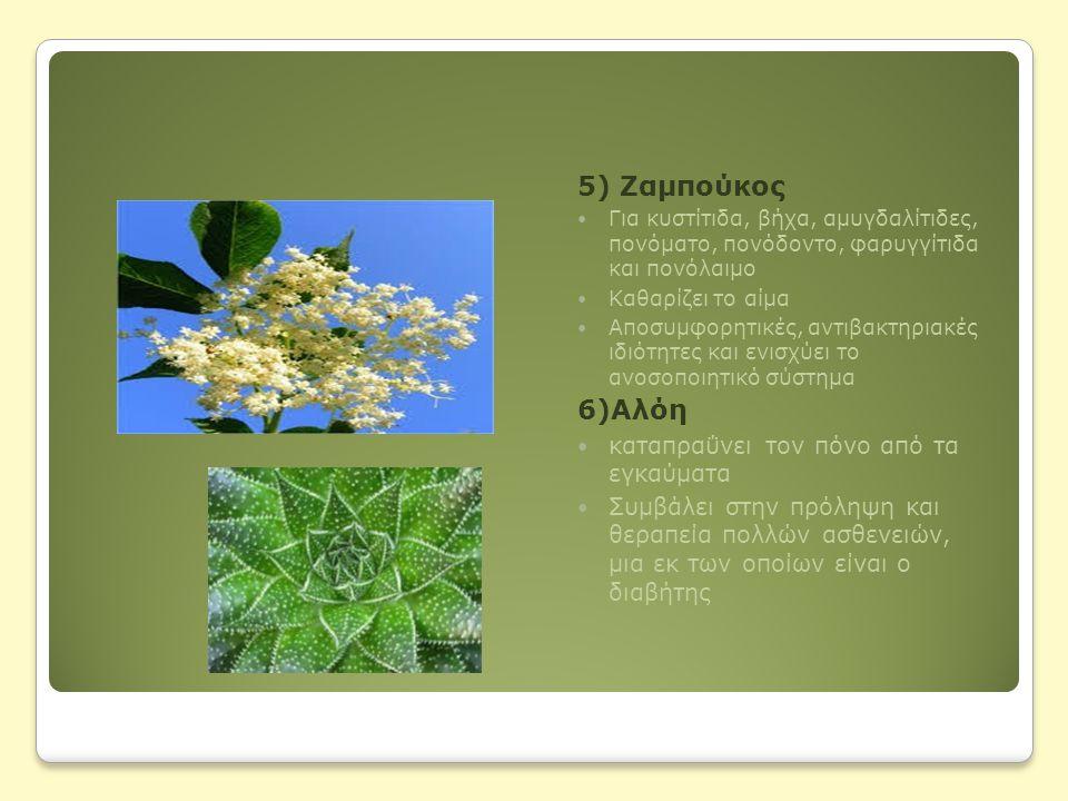 5) Ζαμπούκος 6)Αλόη καταπραΰνει τον πόνο από τα εγκαύματα