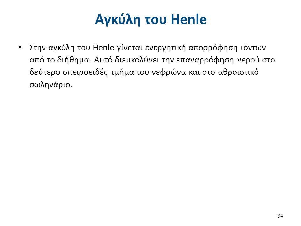 Απεικόνιση της αγκύλης του Henle
