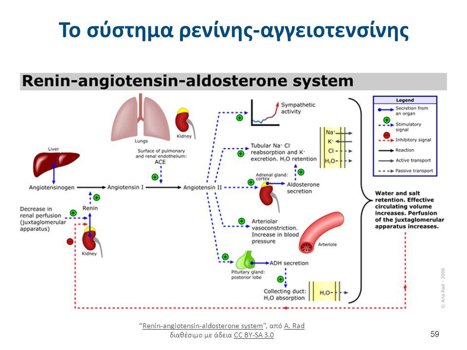 Κύριες δράσεις αγγειοτενσίνης ΙΙ στο νεφρό (και επινεφρίδιο)