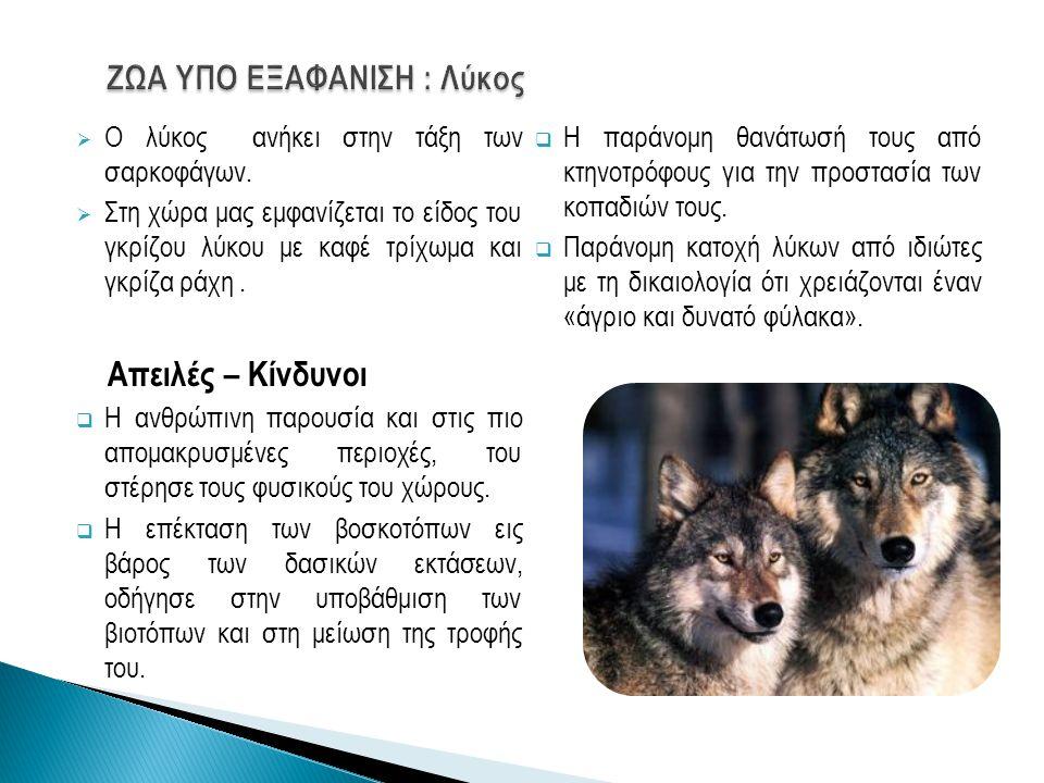 ΖΩΑ ΥΠΟ ΕΞΑΦΑΝΙΣΗ : Λύκος