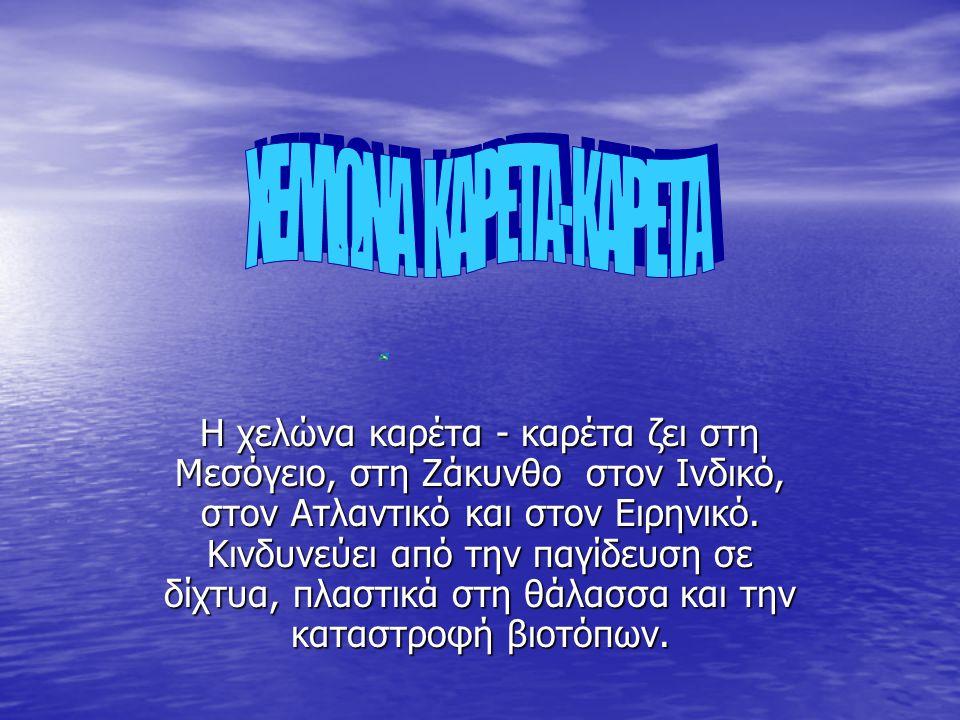 ΧΕΛΛΩΝΑ ΚΑΡΕΤΑ-ΚΑΡΕΤΑ