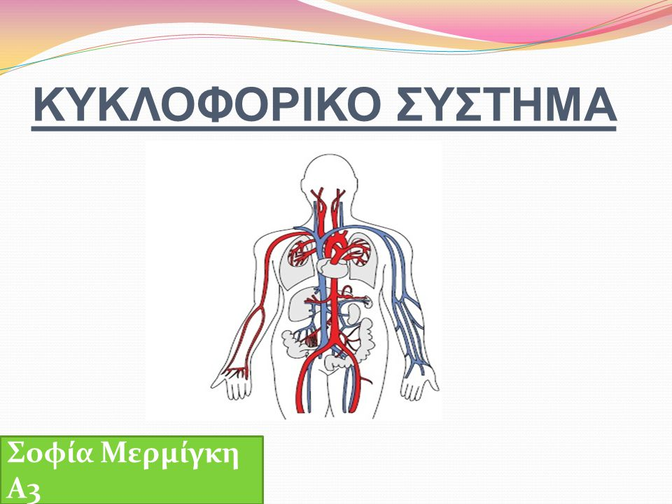 ΚΥΚΛΟΦΟΡΙΚΟ ΣΥΣΤΗΜΑ Σοφία Μερμίγκη Α3