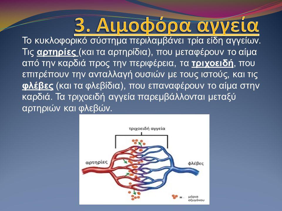 3. Αιμοφόρα αγγεία