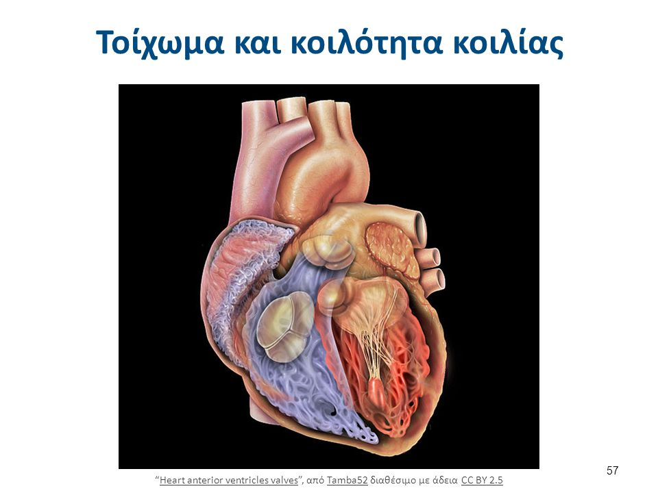 414c Cardiacmuscle , από CFCF διαθέσιμο με άδεια CC BY 3.0