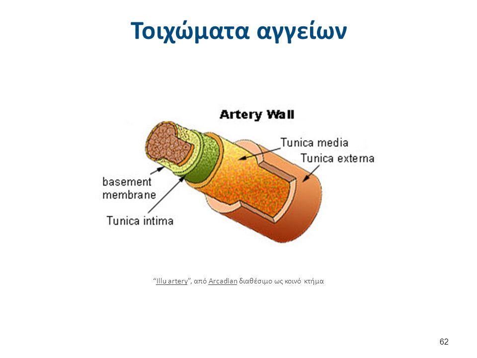 Αρτηρίδια και τριχοειδή