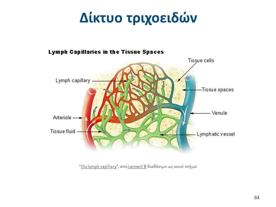 Ρύθμιση της τριχοειδικής αιματικής ροής