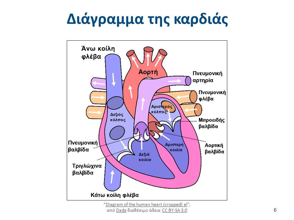 Συσταλτικότητα της καρδιάς-αιματική ροή (1 από 2)