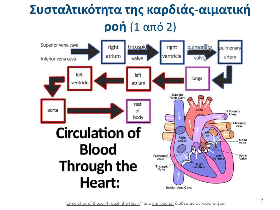 Συσταλτικότητα της καρδιάς-αιματική ροή (2 από 2)
