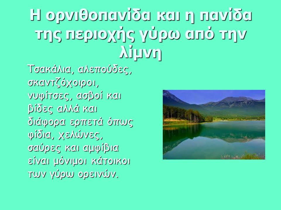 Η ορνιθοπανίδα και η πανίδα της περιοχής γύρω από την λίμνη