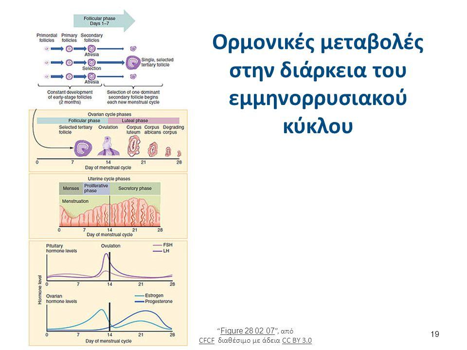 Στάδια ανάπτυξης του ωοθυλακίου