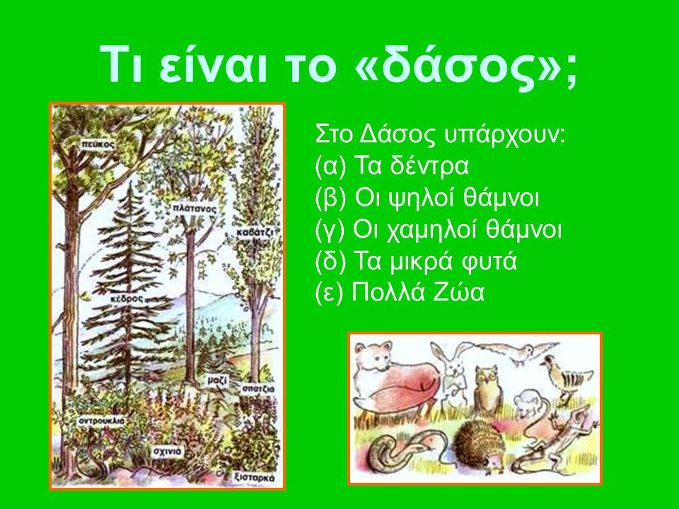 Τι είναι το «δάσος»; Στο Δάσος υπάρχουν: (α) Τα δέντρα