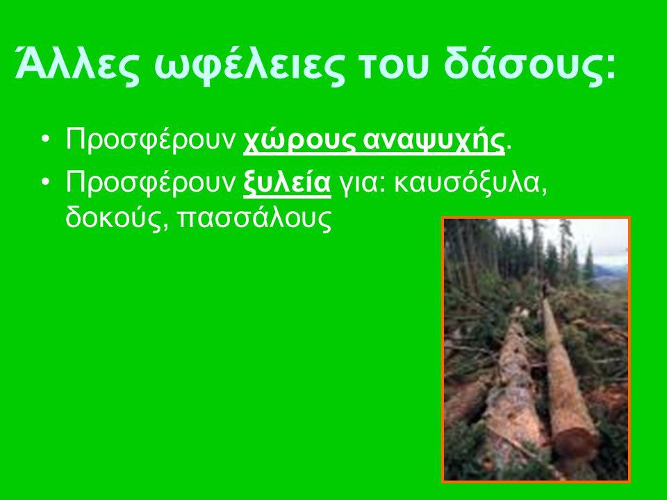 Άλλες ωφέλειες του δάσους: