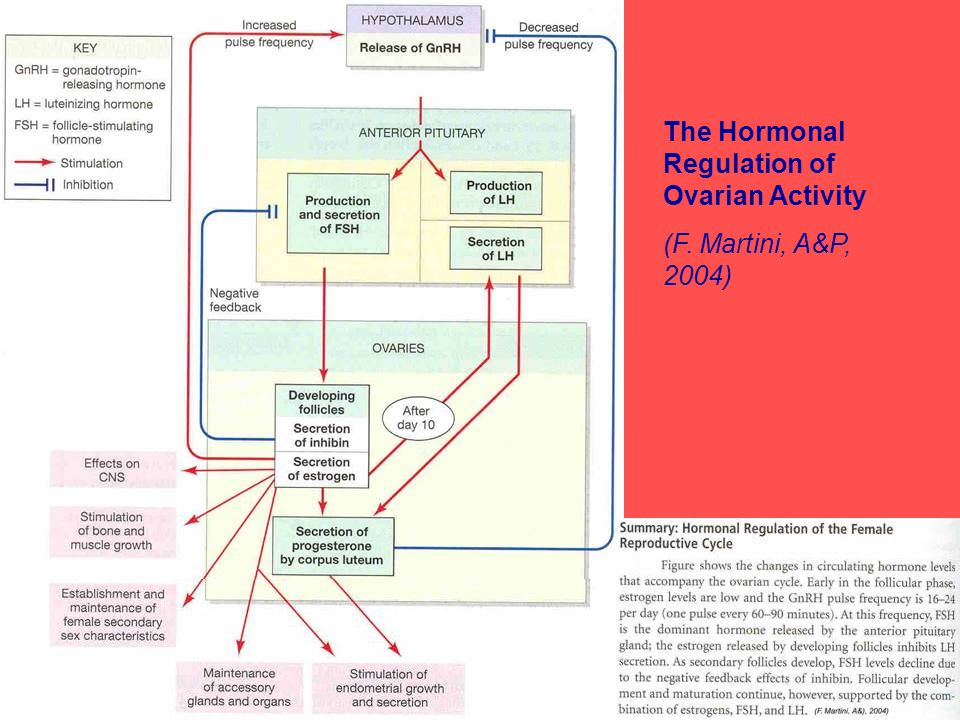 The Hormonal Regulation of Ovarian Activity