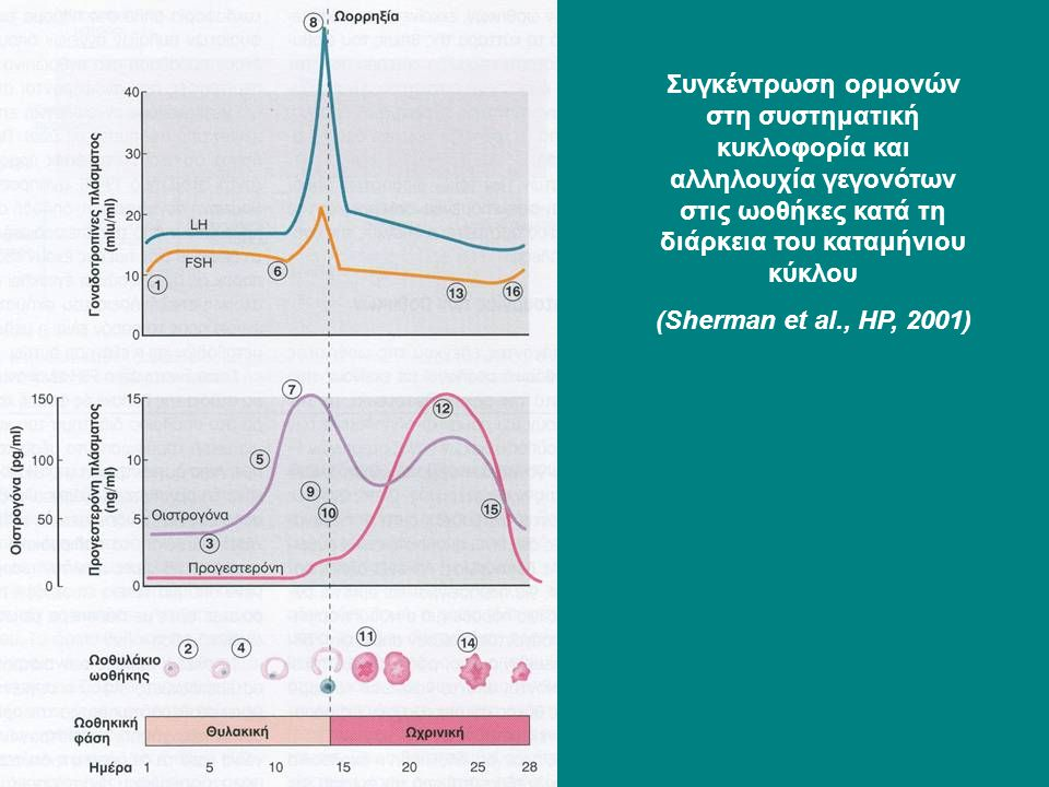 Συγκέντρωση ορμονών στη συστηματική κυκλοφορία και αλληλουχία γεγονότων στις ωοθήκες κατά τη διάρκεια του καταμήνιου κύκλου