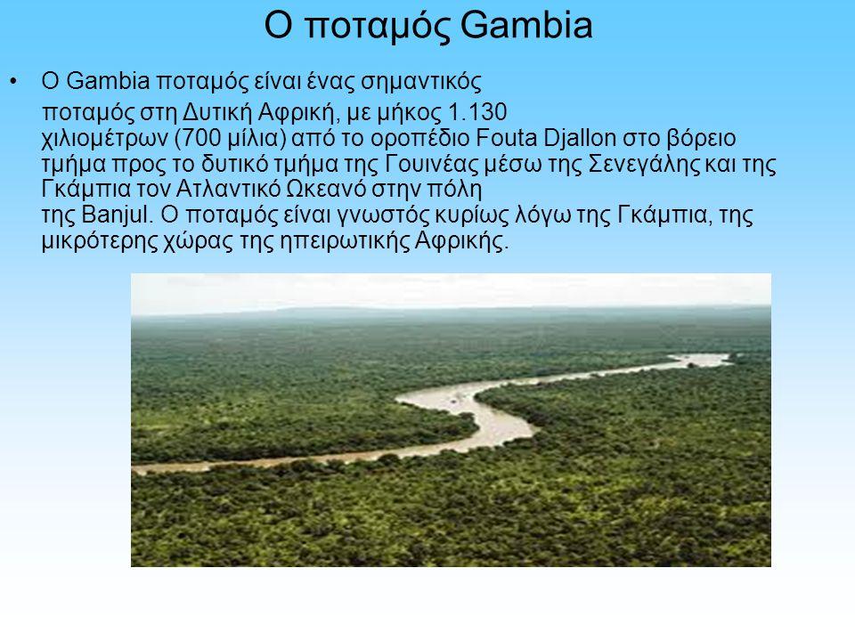 Ο ποταμός Gambia Ο Gambia ποταμός είναι ένας σημαντικός