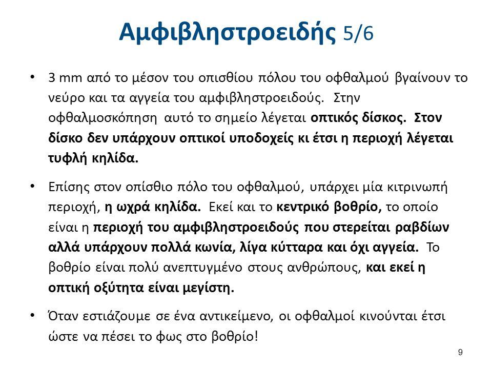 Αμφιβληστροειδής 6/6