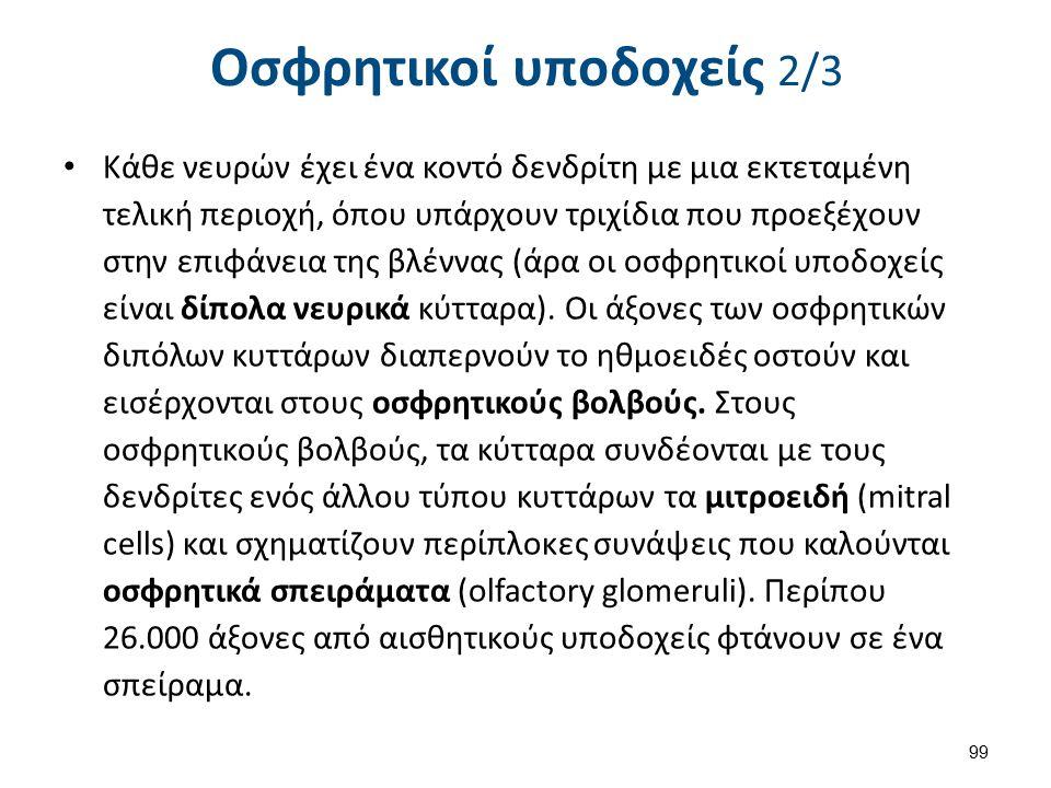 Οσφρητικοί υποδοχείς 3/3