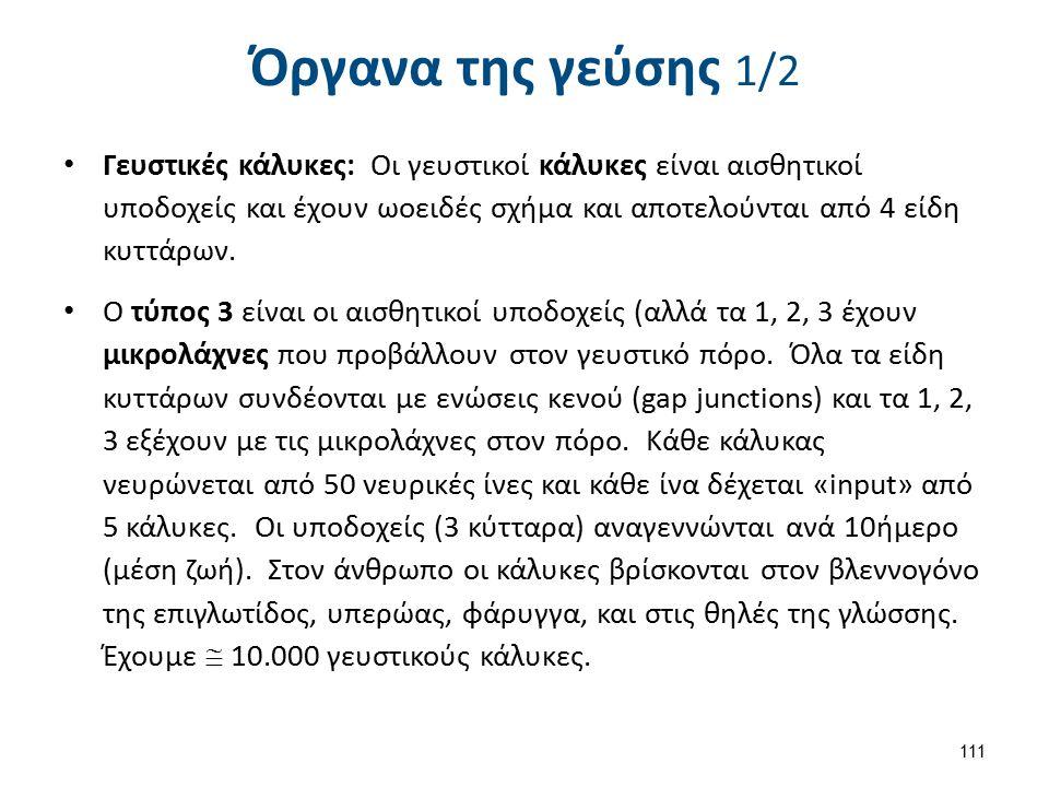 Όργανα της γεύσης 2/2