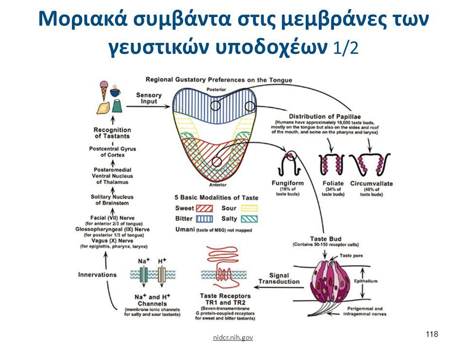 Μοριακά συμβάντα στις μεμβράνες των γευστικών υποδοχέων 2/2