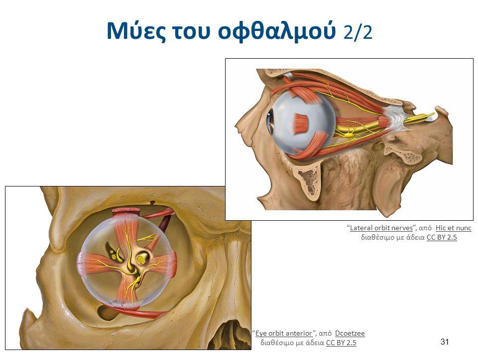 Προστασία οφθαλμού Το μάτι προστατεύεται από τον κόγχο.