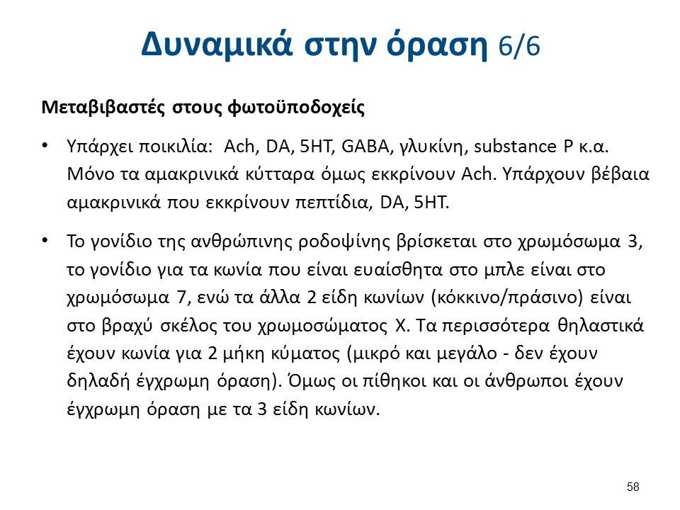 Στοιβάδες αμφιβληστροειδούς και υποδοχείς όρασης (κωνία και ραβδία)