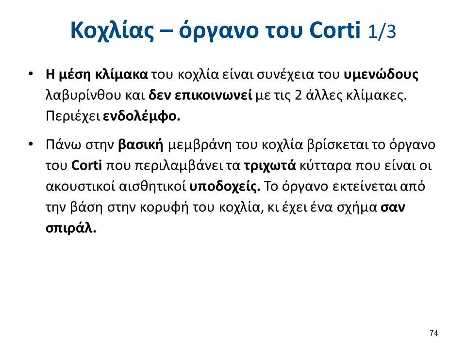Κοχλίας – όργανο του Corti 2/3