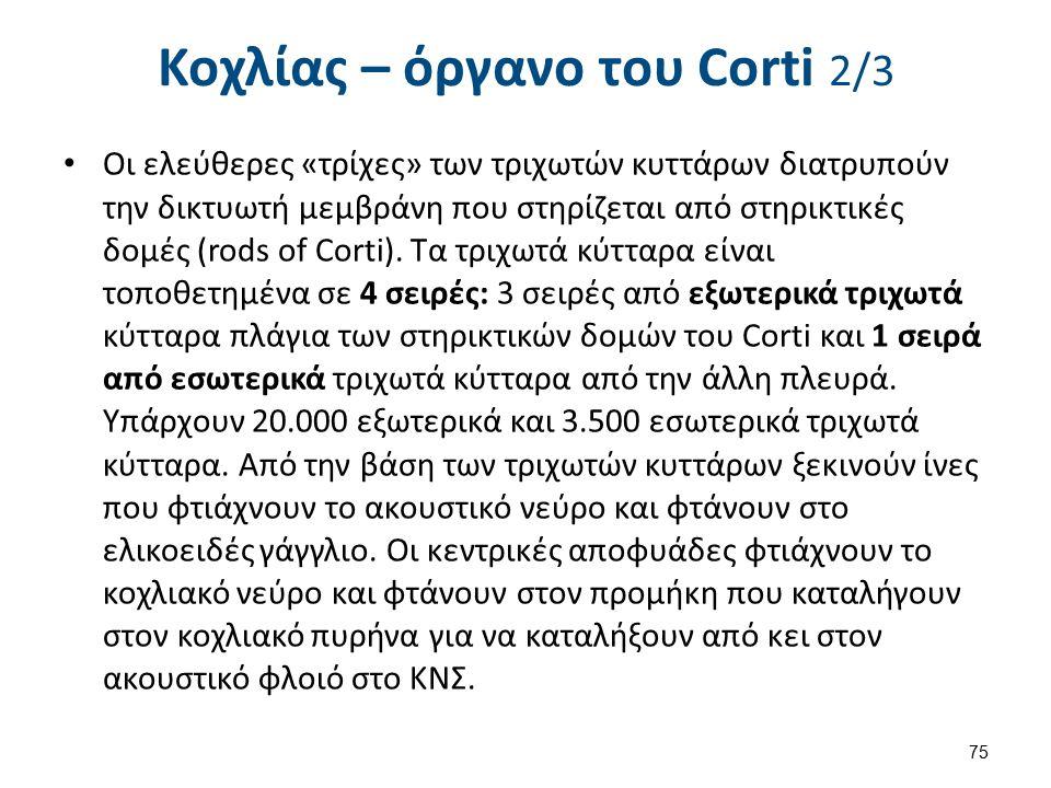 Κοχλίας – όργανο του Corti 3/3