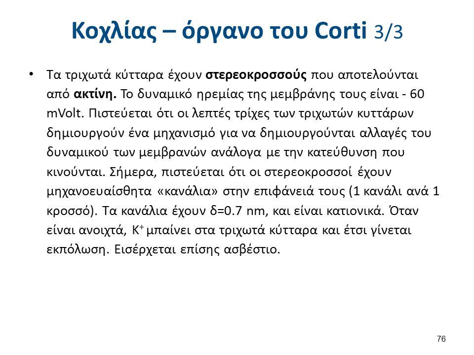 Organ of corti , από Madhero88 διαθέσιμο με άδεια CC BY-SA 3.0