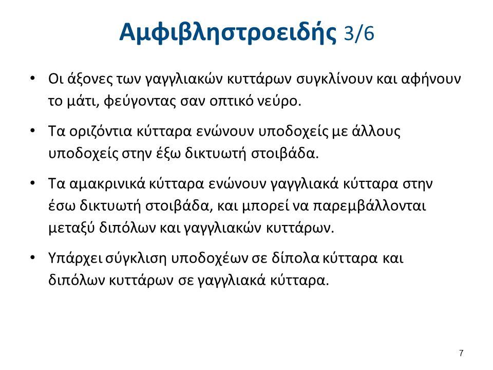 Αμφιβληστροειδής 4/6