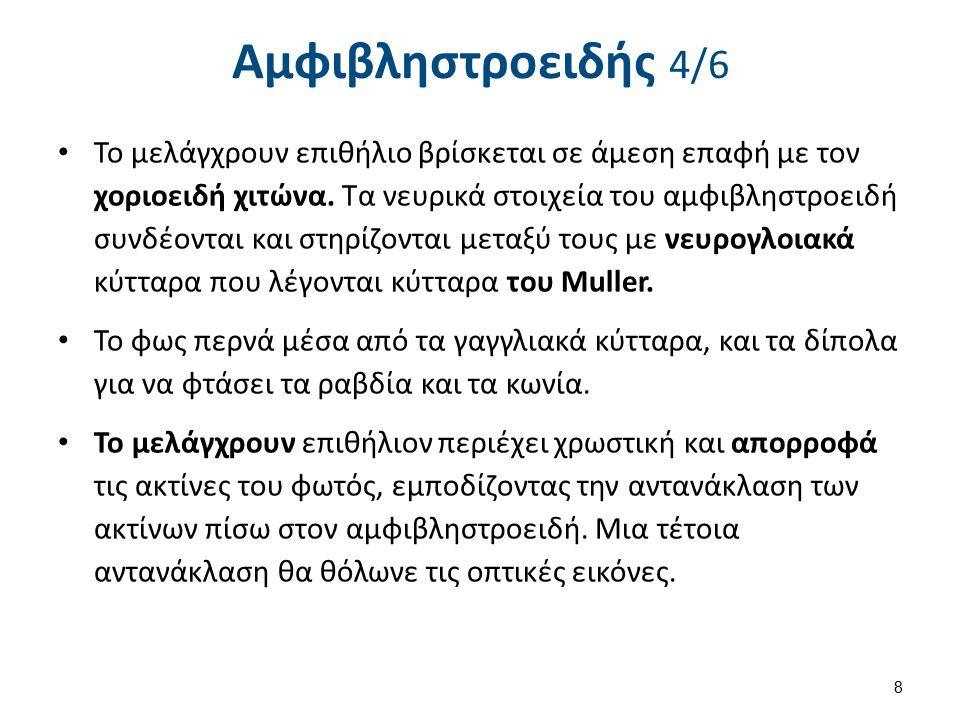 Αμφιβληστροειδής 5/6
