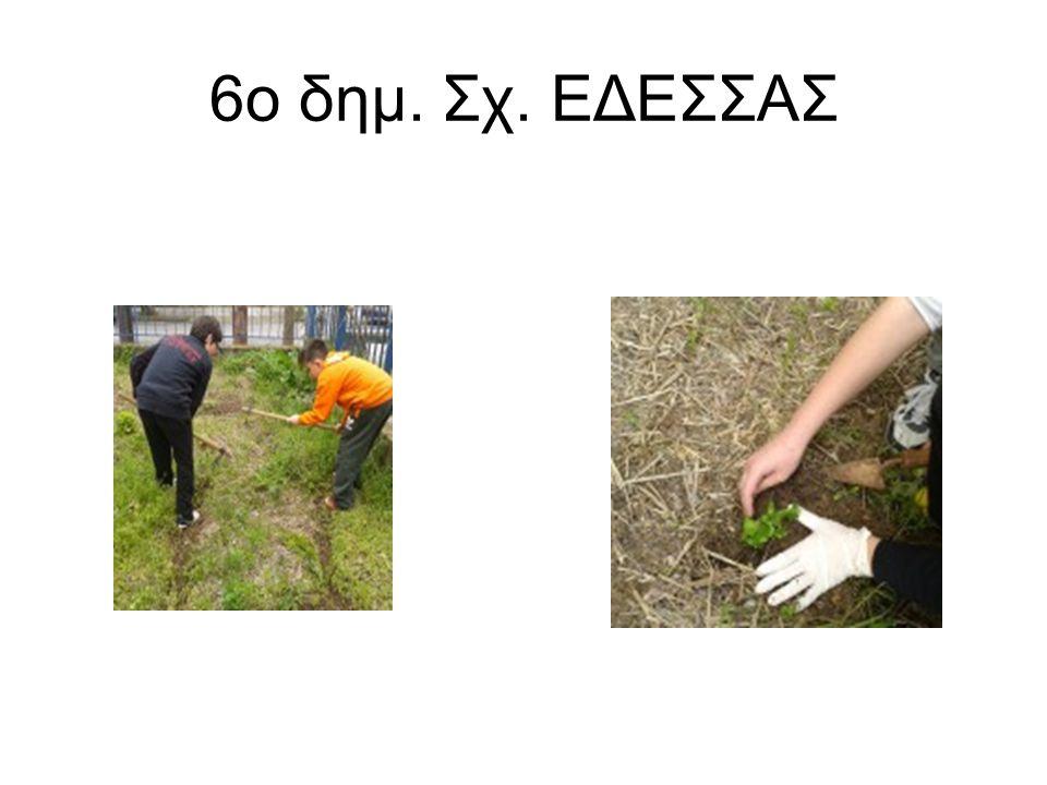 6o δημ. Σχ. ΕΔΕΣΣΑΣ