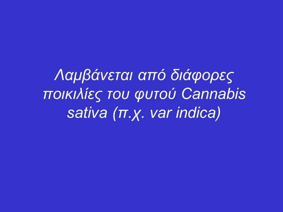 Λαμβάνεται από διάφορες ποικιλίες του φυτού Cannabis sativa (π. χ