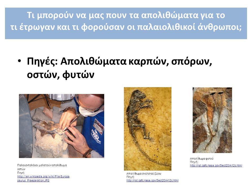 Πηγές: Aπολιθώματα καρπών, σπόρων, οστών, φυτών