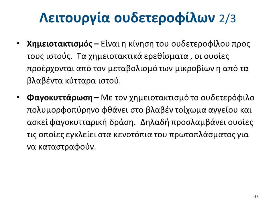 Λειτουργία ουδετεροφίλων 3/3