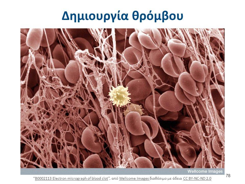 Αιμοπετάλια μεταξύ λευκών και ερυθρών