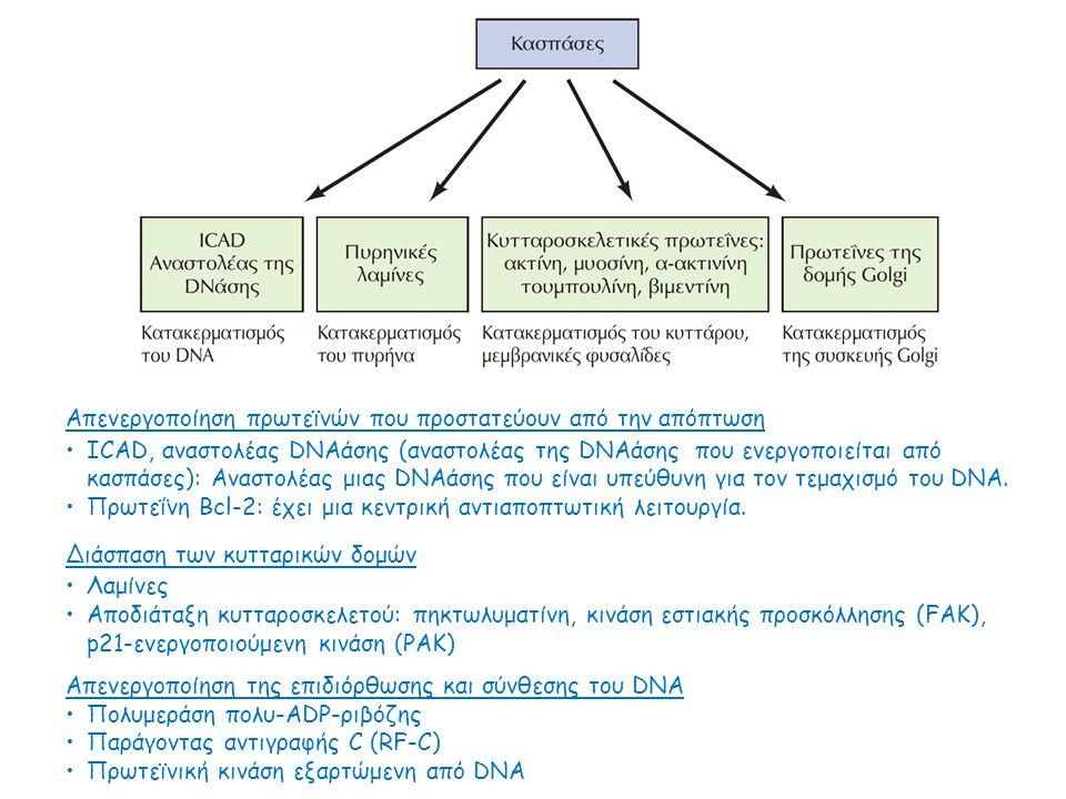 Απενεργοποίηση πρωτεϊνών που προστατεύουν από την απόπτωση