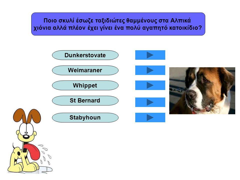 Ποιο σκυλί έσωζε ταξιδιώτες θαμμένους στα Αλπικά